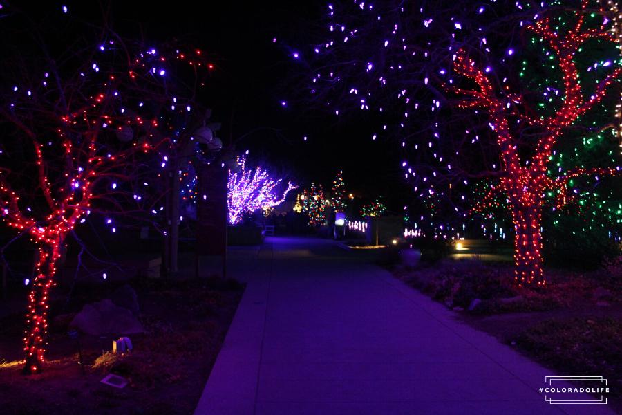 blossoms of light Denver