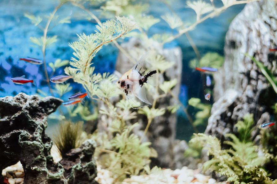 aquarium winter date idea