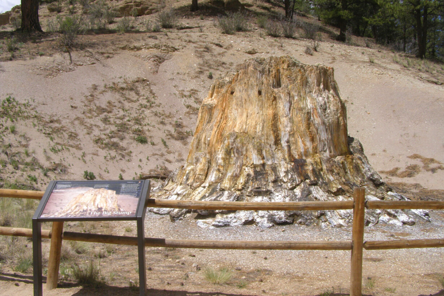florissant fossil beds colorado