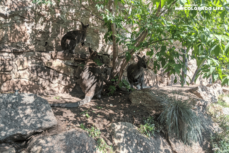 cheyenne mountain zoo - australia roundabout