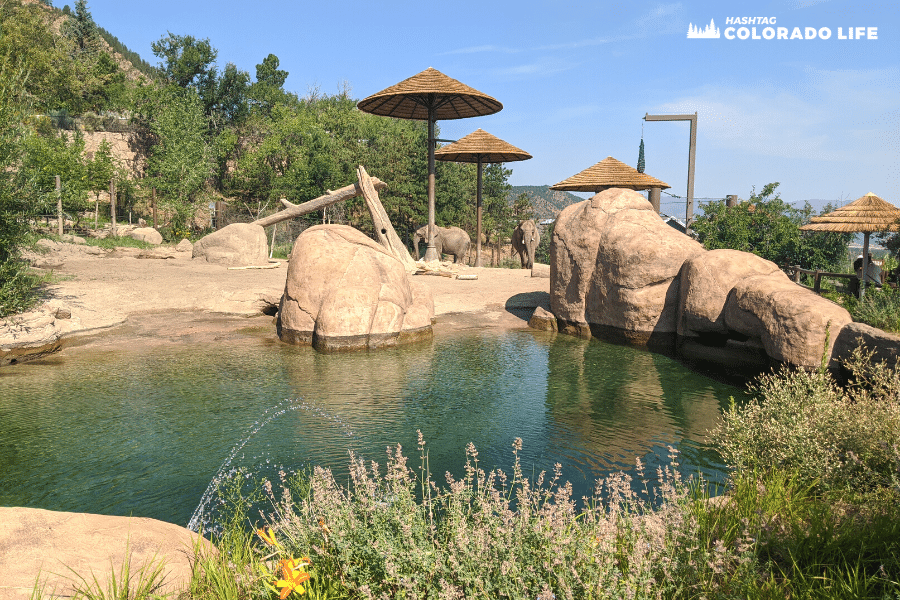 A Complete Guide for Visiting Cheyenne Mountain Zoo in 2021