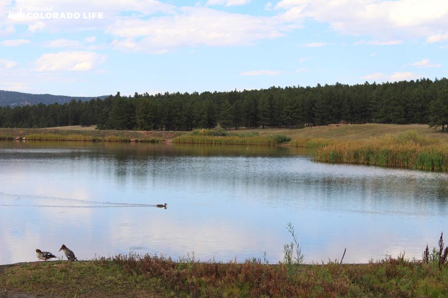 manitou lake birds and wildlife