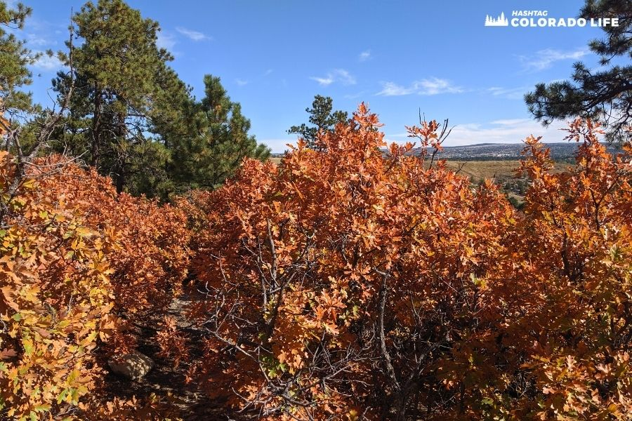 fall colors in colorado springs
